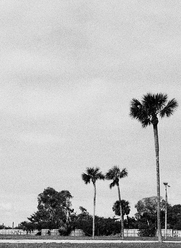 Mid Season Sale messaging with a background image in black and white of palm trees