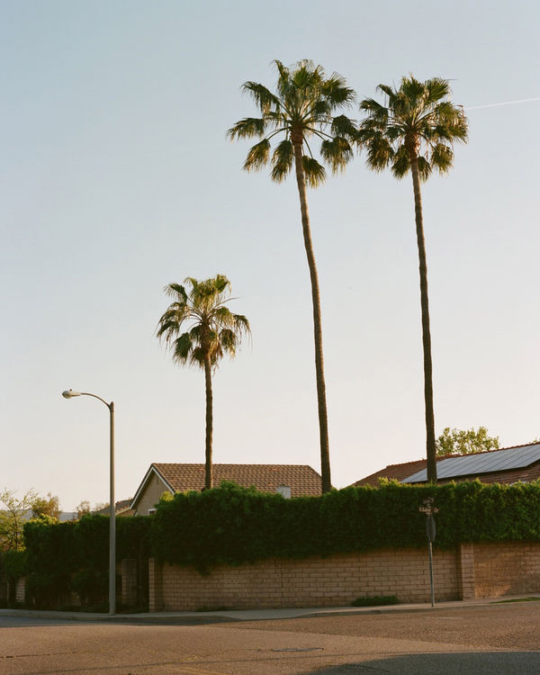 Photo of a LA street with palm trees.